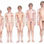 Por que homens gordos tem o pênis pequeno? Isto interfere em algo?